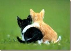 kitty friends
