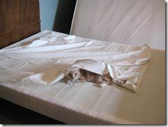 Master Bedroom redo 2013 004